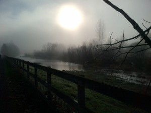 Marymoor in the Mist